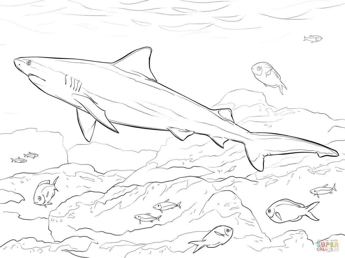 Great White Shark Coloring Pages  Realistic Bull Shark coloring page