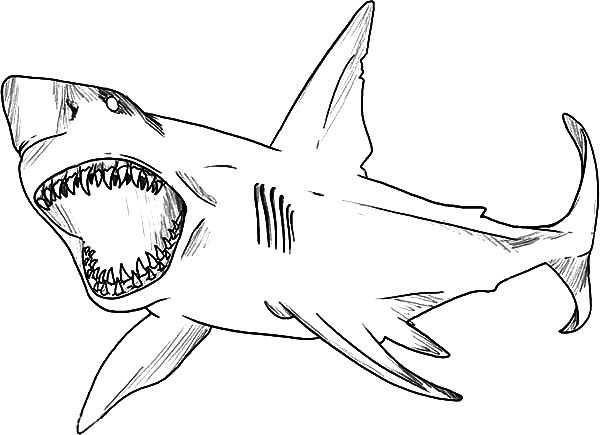 Great White Shark Coloring Pages  Great White Shark clipart coloring page Pencil and in
