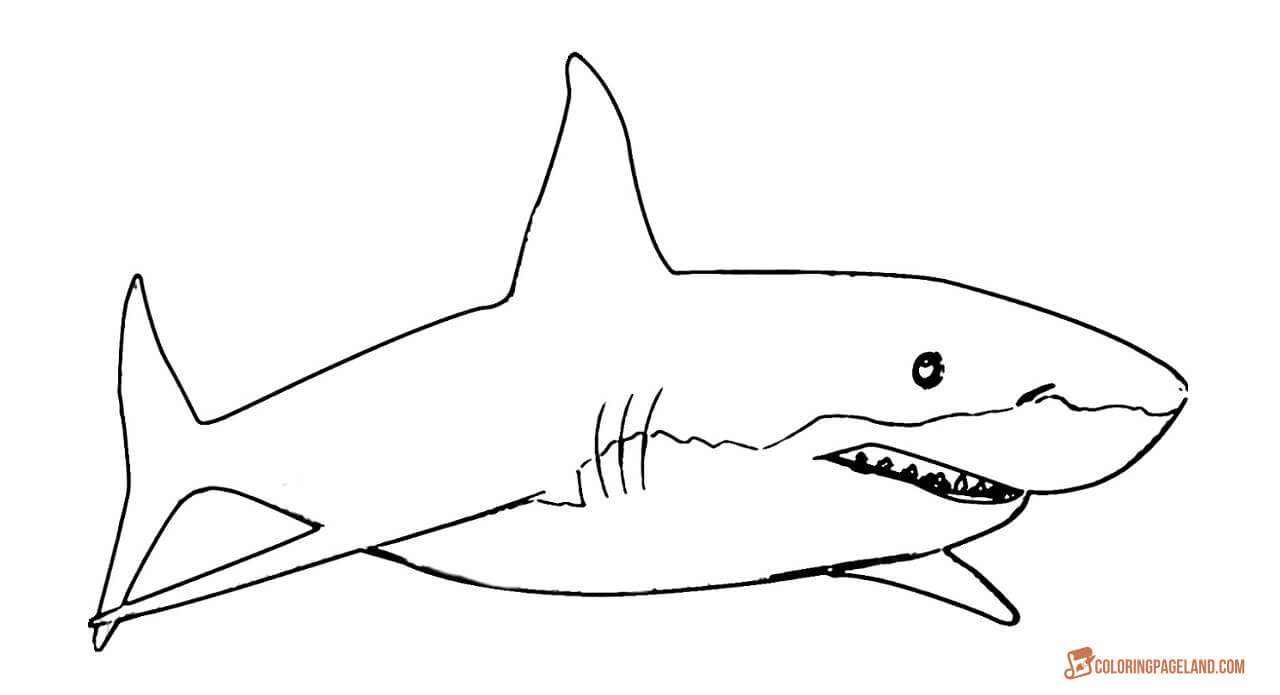 Great White Shark Coloring Pages  Great White Shark Coloring Pages Downloadable and