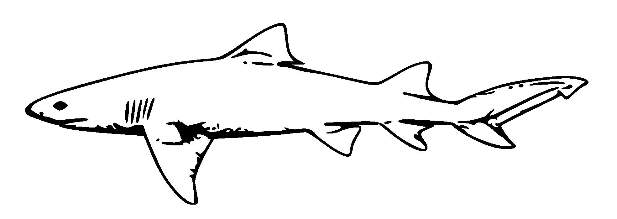 Great White Shark Coloring Pages  Great White Shark Clip Art