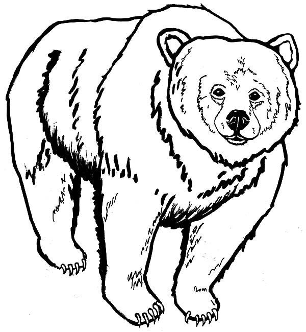 Grizzly Bear Coloring Pages For Kids  Grizzly Bear coloring Download Grizzly Bear coloring