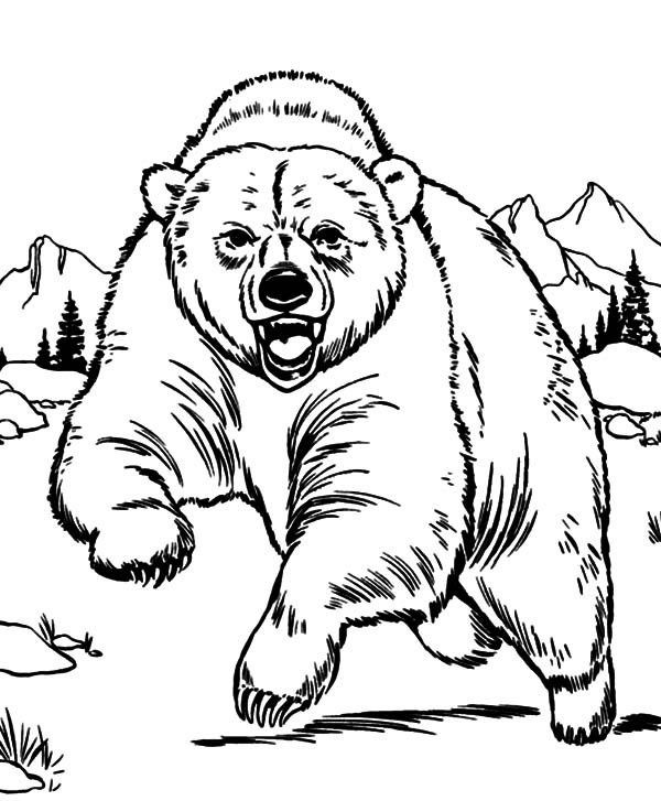 Grizzly Bear Coloring Pages For Kids  Coloring Book Grizzly Bear