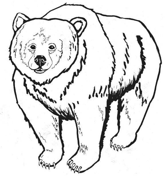 Grizzly Bear Coloring Pages For Kids  Free Printable Bear Coloring Pages For Kids