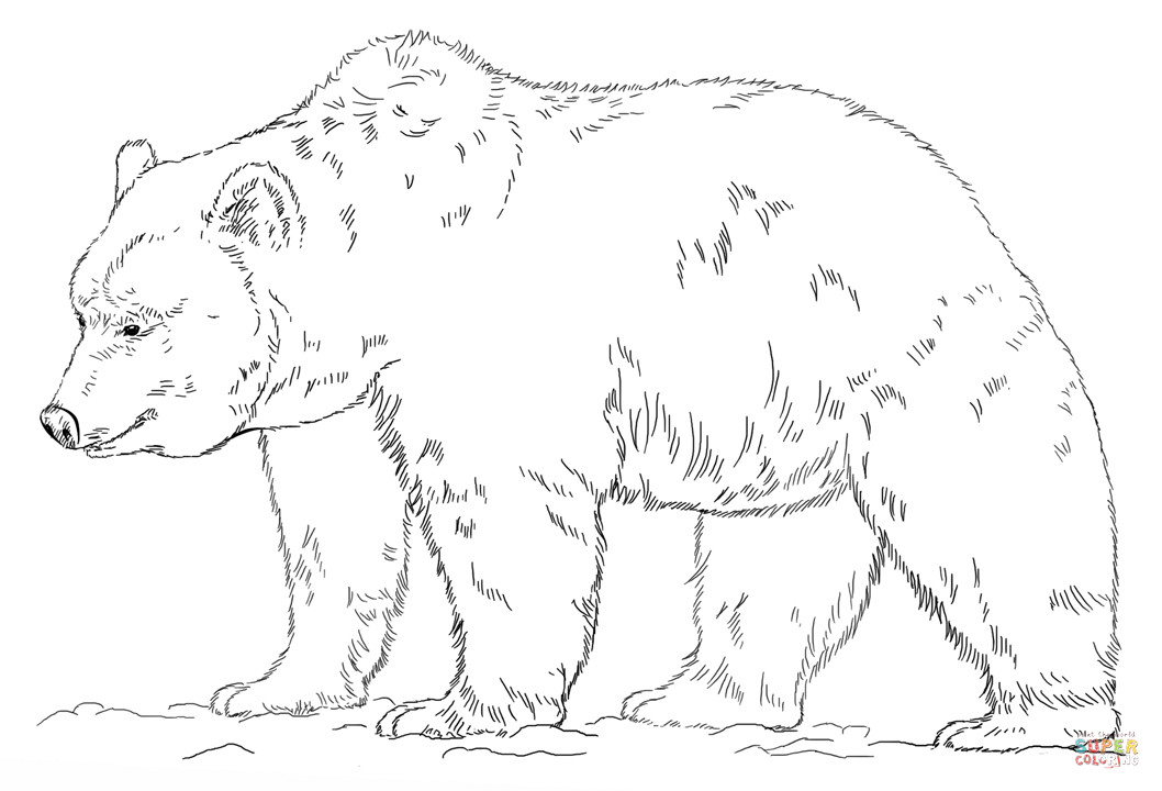 Grizzly Bear Coloring Pages For Kids  Grizzly Bear coloring page