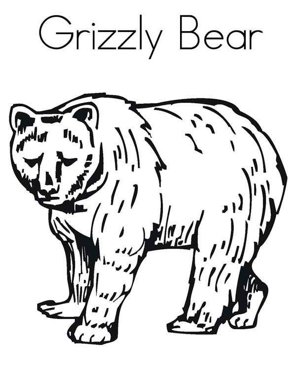 Grizzly Bear Coloring Pages For Kids  Enormous Grizzly Bear Coloring Page NetArt