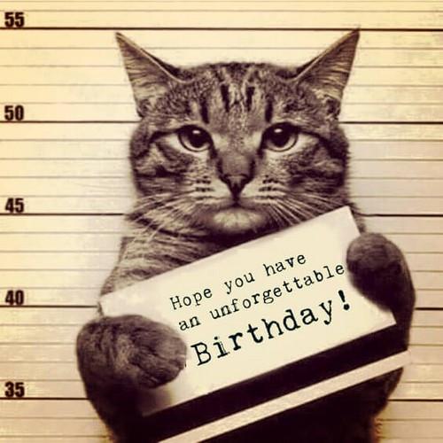 Happy Birthday Funny Cats  45 Cat Birthday Memes