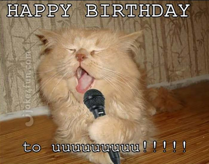 Happy Birthday Funny Cats  20 Cat Birthday Memes That Are Way Too Adorable