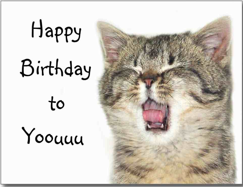 Happy Birthday Funny Cats  Funny Birthday Wishes Cat I Have Baloons For U