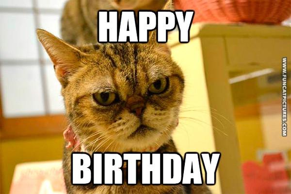 Happy Birthday Funny Cats  Birthday