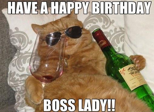 Happy Birthday Funny Cats  It s The Head Cat s Birthday