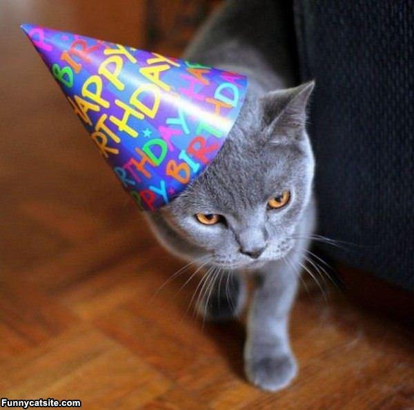 Happy Birthday Funny Cats  Cute Cat Birthday Quotes QuotesGram