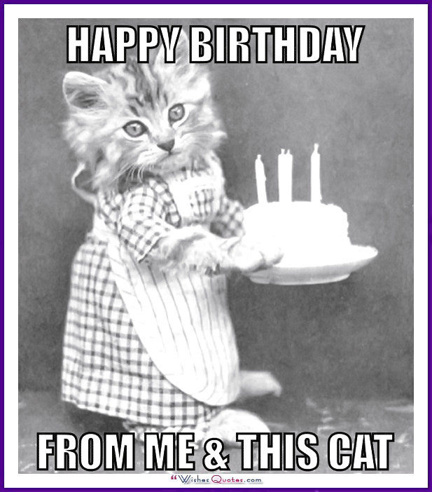 Happy Birthday Funny Cats  Happy Birthday Memes with Funny Cats Dogs and Cute Animals