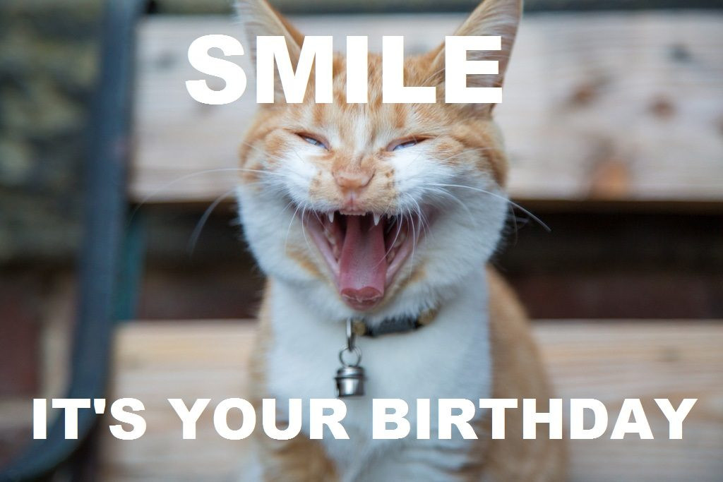 Best ideas about Happy Birthday Video Funny . Save or Pin Happy Birthday Memes and Funny Messages Now.