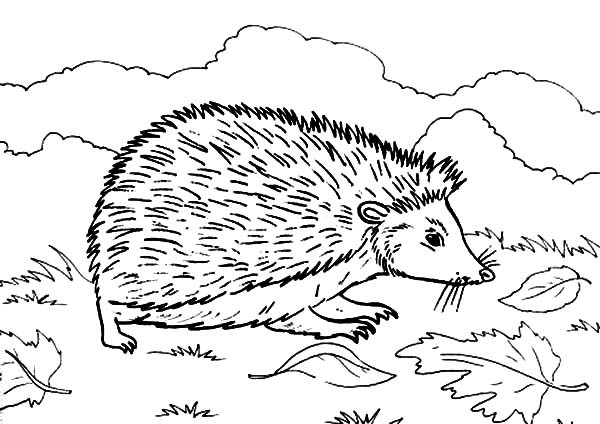 Hedgehog Coloring Pages  Hedgehog Free Coloring Pages