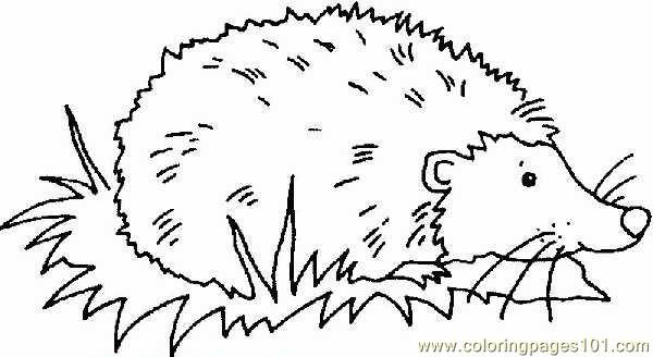 Hedgehog Coloring Pages  Hedgehog Coloring Page Free Hedgehog Coloring Pages