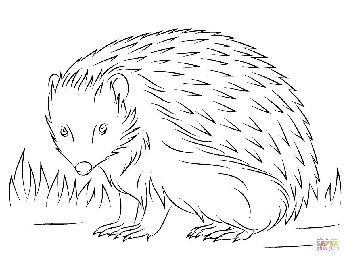 Hedgehog Coloring Pages  Hedgehog Printable Coloring Pages