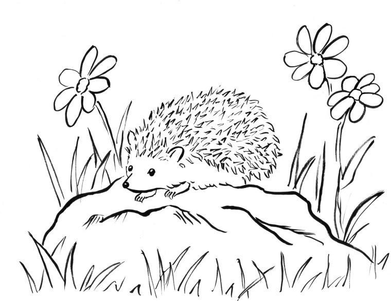 Hedgehog Coloring Pages  Hedgehog Coloring Page Samantha Bell