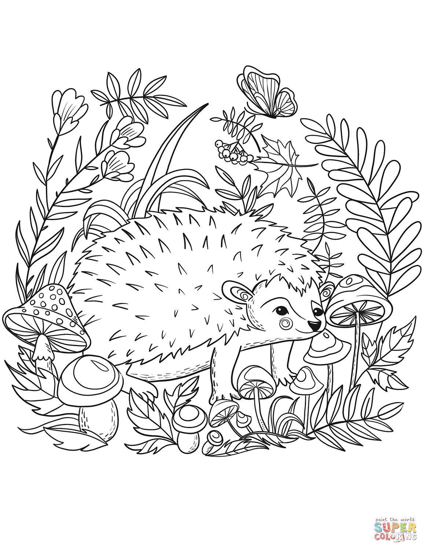 Hedgehog Coloring Pages  Hedgehog coloring page