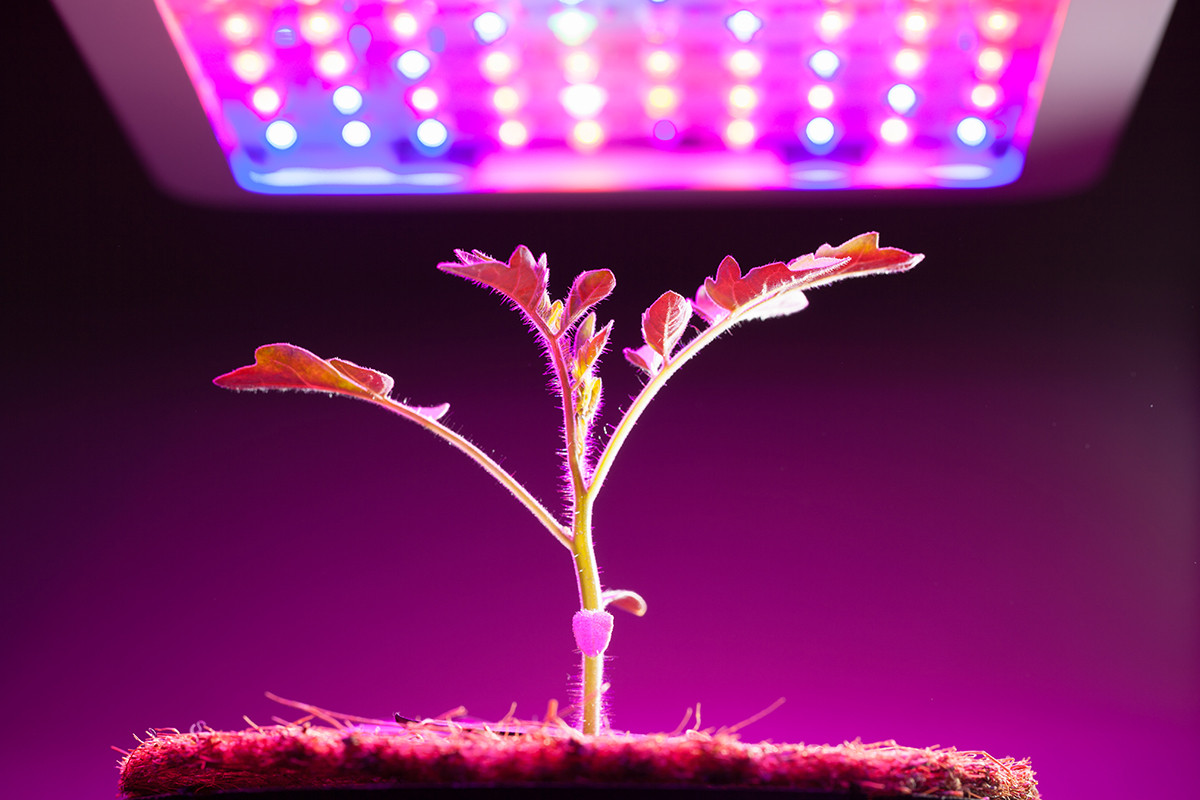Best ideas about Indoor Plant Light . Save or Pin Grow Lights for Indoor Plants and Indoor Gardening An Now.