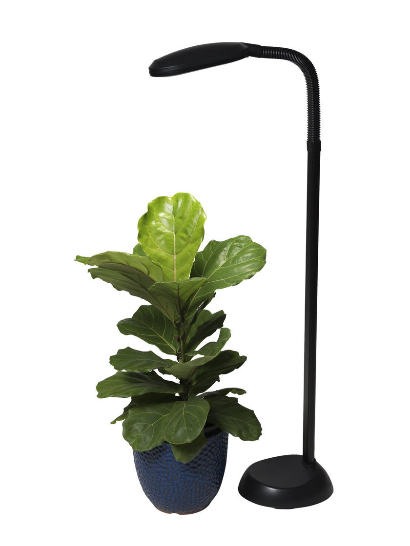 Best ideas about Indoor Plant Light . Save or Pin CFL Grow Light Full Spectrum Floor Plant Lamp Now.