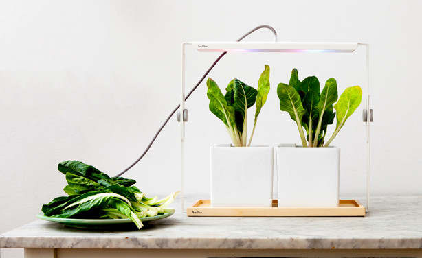 Best ideas about Indoor Plant Light . Save or Pin Design Centric Indoor Plant Lights For Urban Living Now.