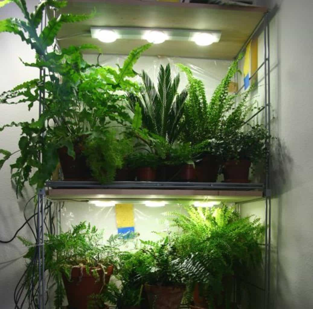 Best ideas about Indoor Plant Light . Save or Pin Indoor Plants With LED Lighting Grow Lighting For Your Now.