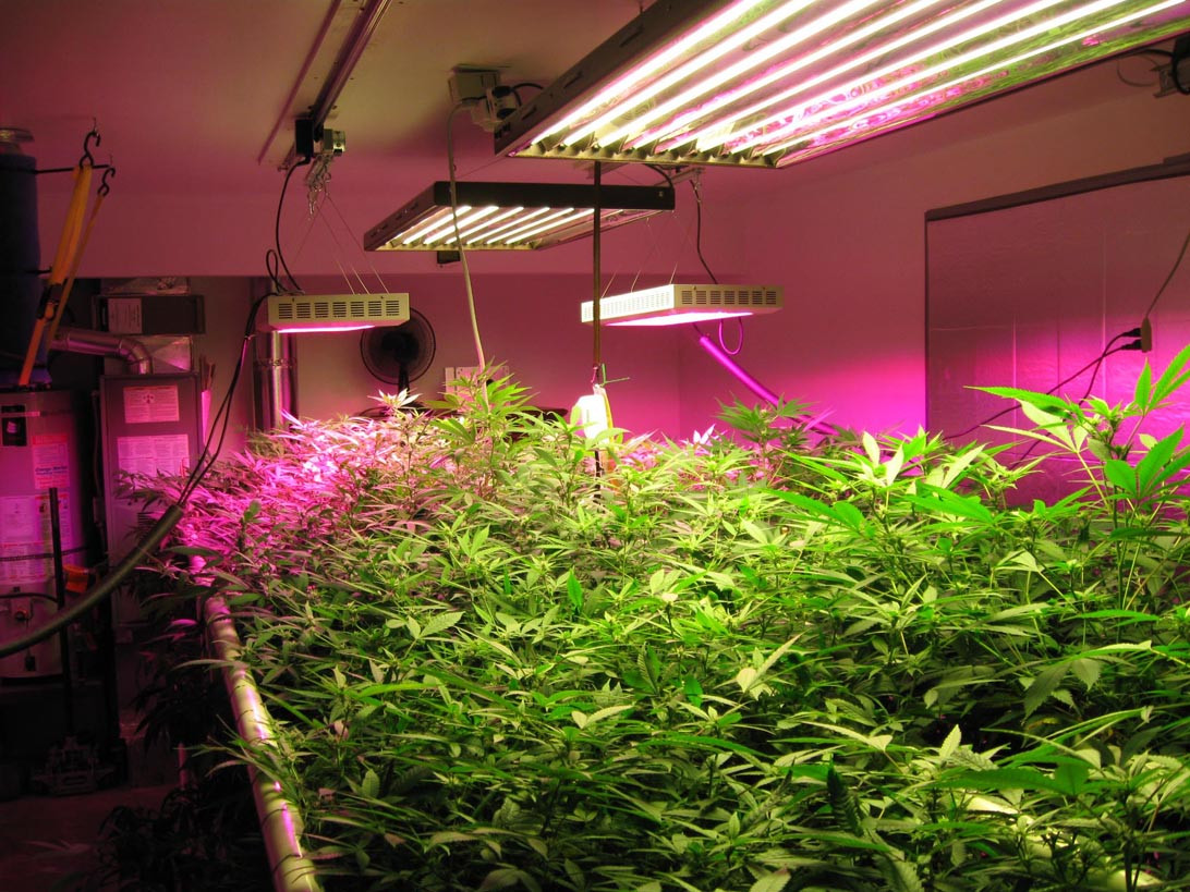 Best ideas about Indoor Plant Light . Save or Pin Optimizing Your Plant Growth With Indoor Grow Lights Now.