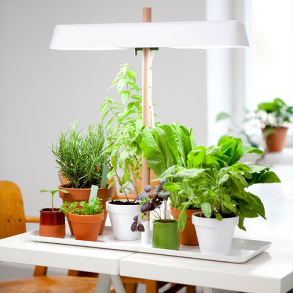 Best ideas about Indoor Plant Light . Save or Pin Green Light A minimalist kitchen light for growing your Now.