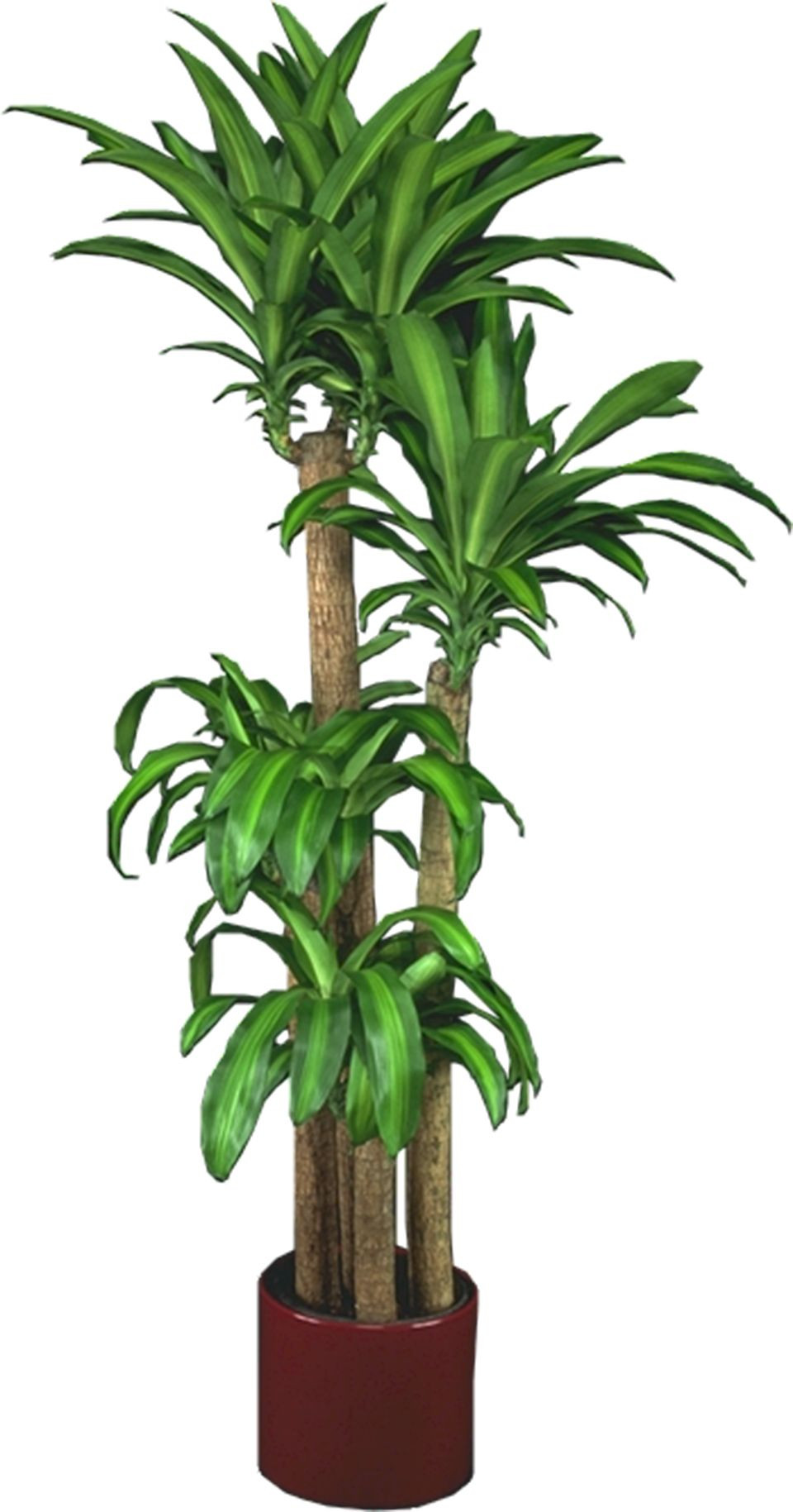 Best ideas about Indoor Plant Light . Save or Pin Low Light Plants Indoor Plants & House Plants Now.