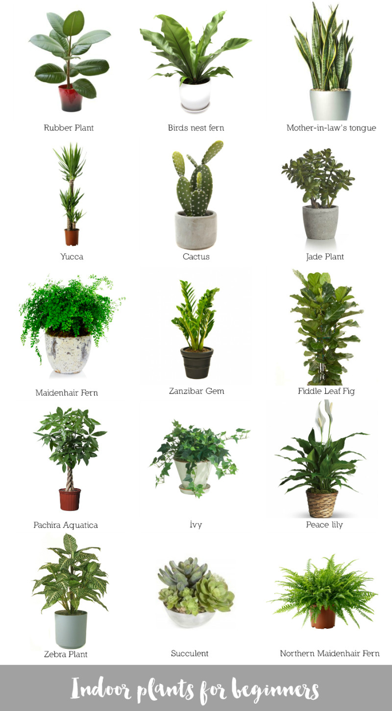 Best ideas about Indoor Plant Light . Save or Pin Indoor plants for beginners Katrina Chambers Now.