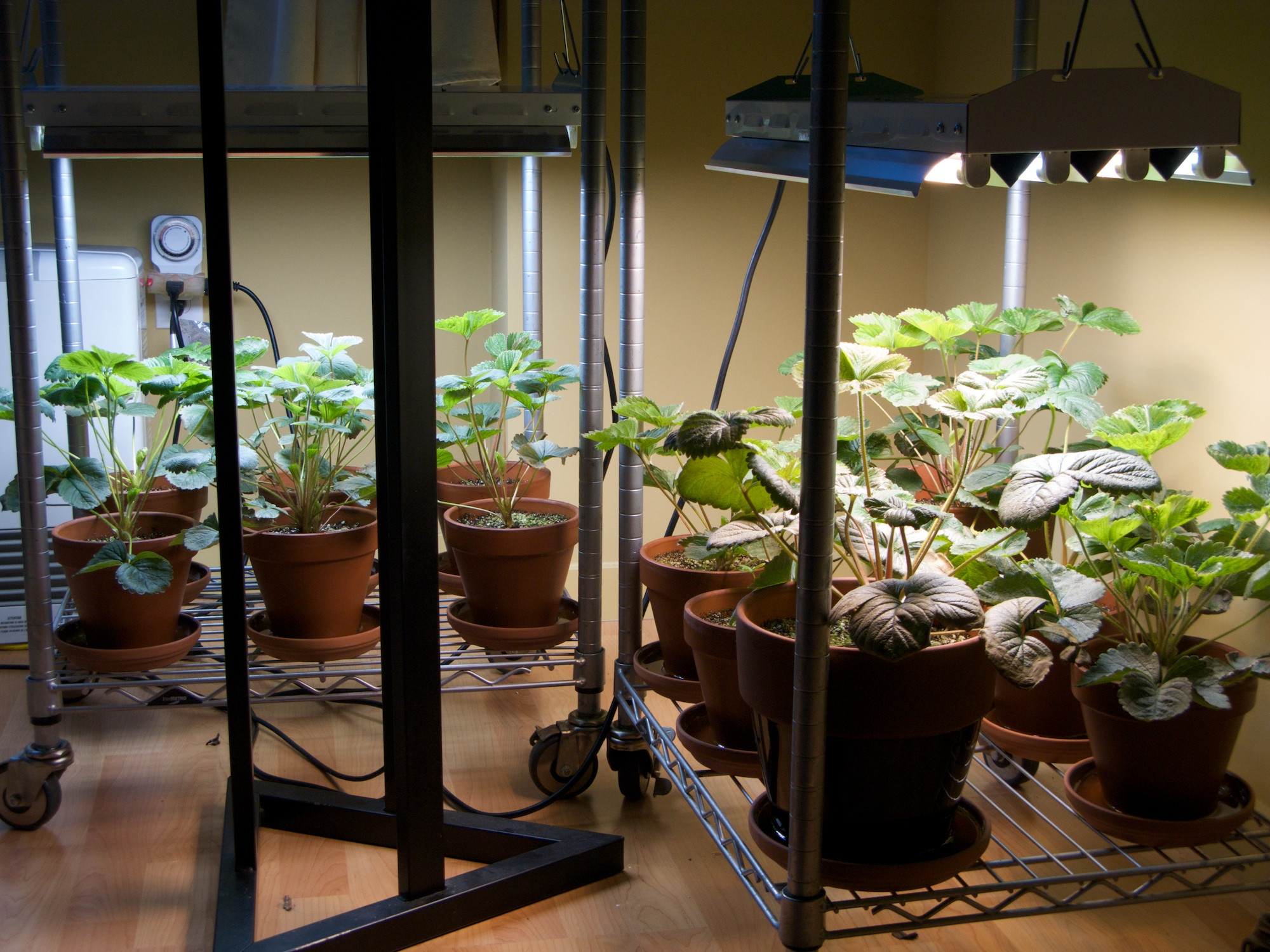 Best ideas about Indoor Plant Light . Save or Pin Lighting Your Indoor Garden Electronic Products Now.