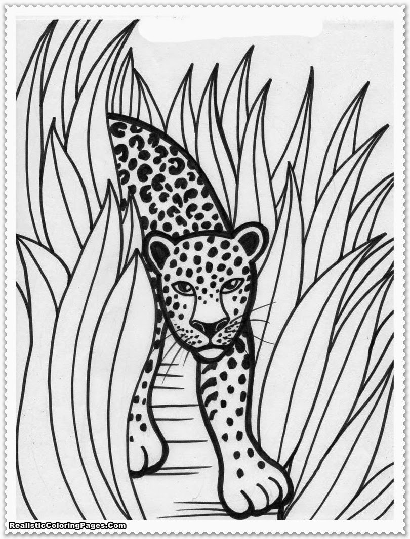 Jungle Coloring Pages  Realistic Jungle Animal Coloring Pages
