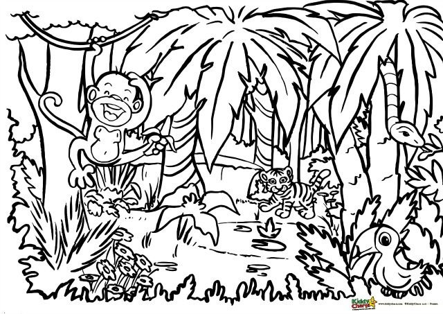 Jungle Coloring Pages  Jungle coloring for adults and kids