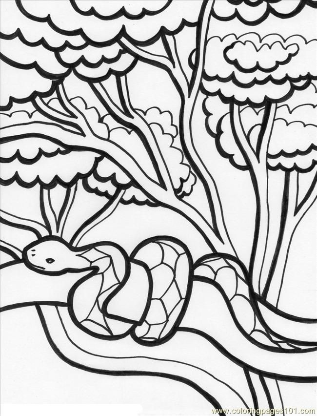Jungle Coloring Pages  Jungle Animals Coloring Pages Coloring Home