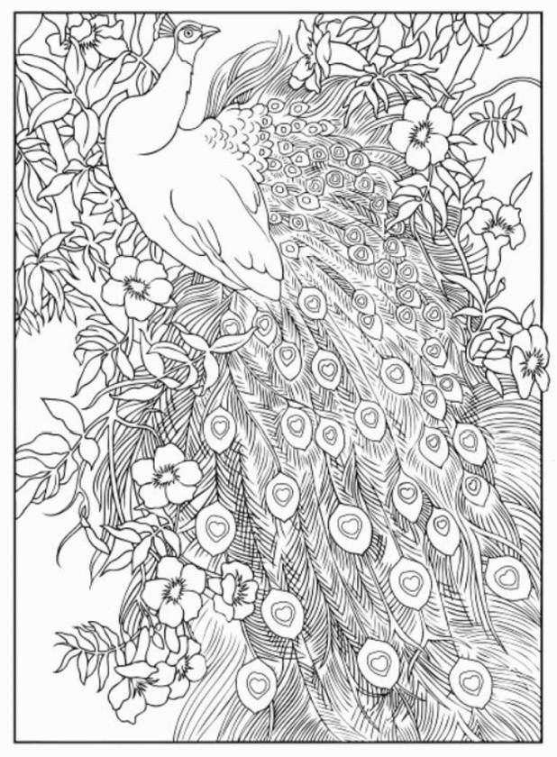 Kama Sutra Coloring Book  Best the Shoulder Holder Kama Sutra y Coloring Pages