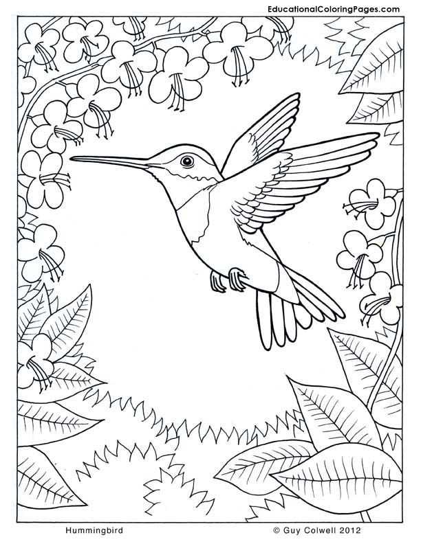 Nature Coloring Pages For Kids  Colouring Pages Nature Coloring Home