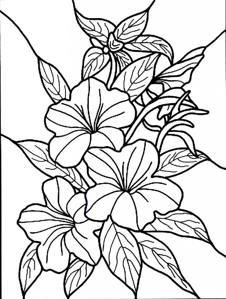 Online Coloring Sheets For Kids  Free Printable Hibiscus Coloring Pages For Kids
