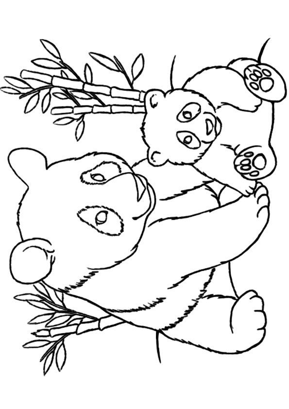 Panda Bear Coloring Pages  Best 25 Panda coloring pages ideas on Pinterest