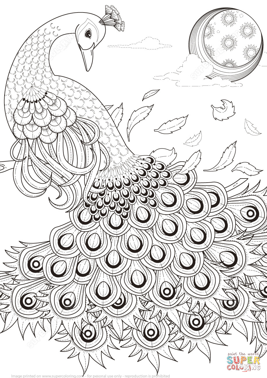 Peacock Coloring Sheet  Graceful Peacock coloring page