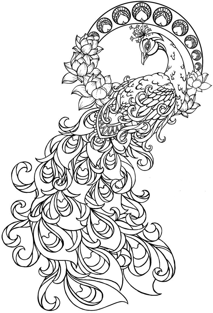 Peacock Coloring Sheet  Peacock Coloring Pages Coloring Site Peacock Colouring
