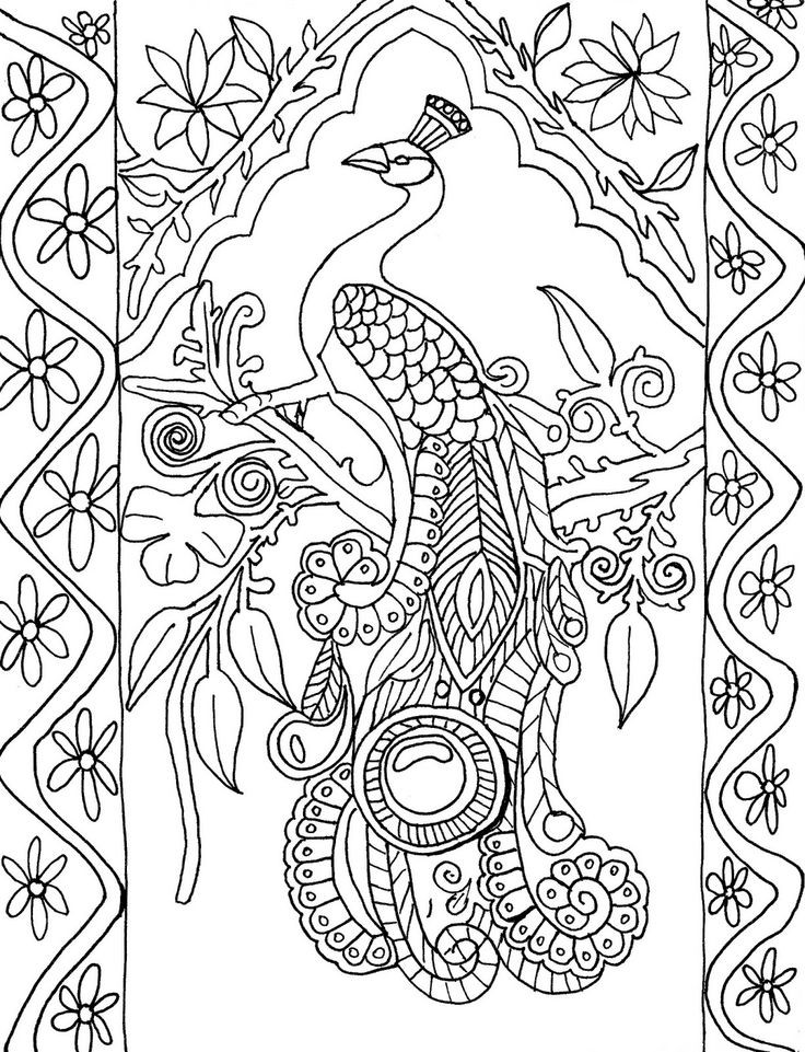 Peacock Coloring Sheet  Beautiful peacock coloring pages for girls Print Color Craft