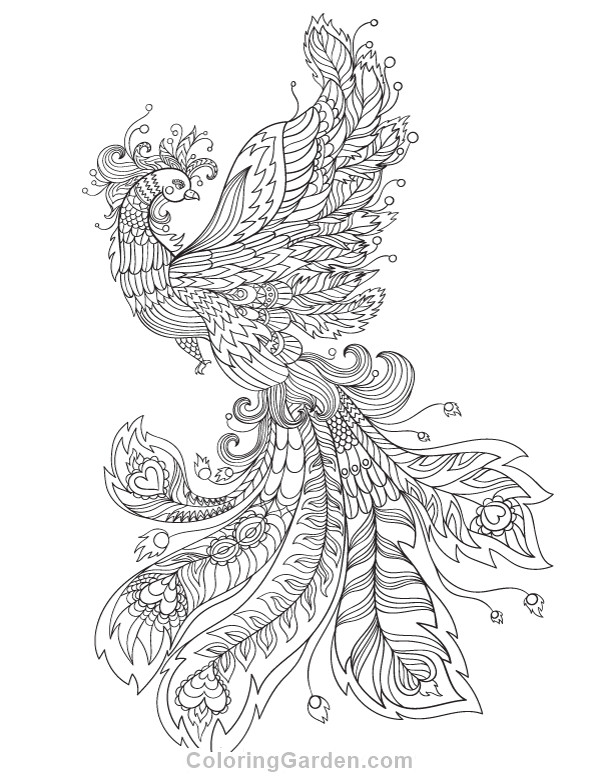 Pheonix Coloring Pages  Phoenix Adult Coloring Page