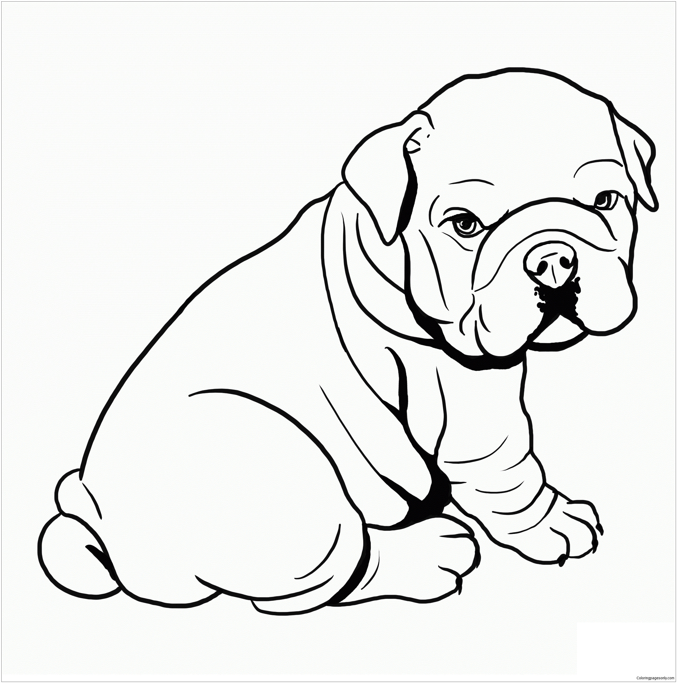 Pit Bull Coloring Book  Cute Baby Pitbull Coloring Page Free Coloring Pages line