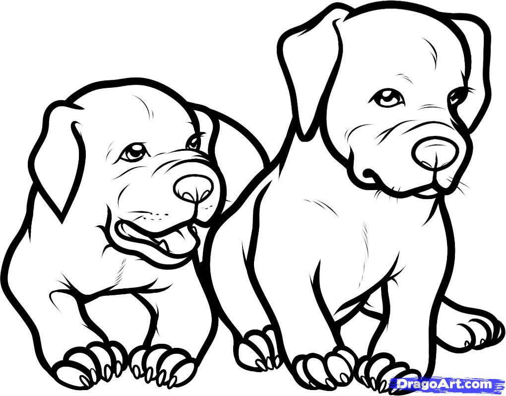 Pit Bull Coloring Book  Pitbull Coloring Pages