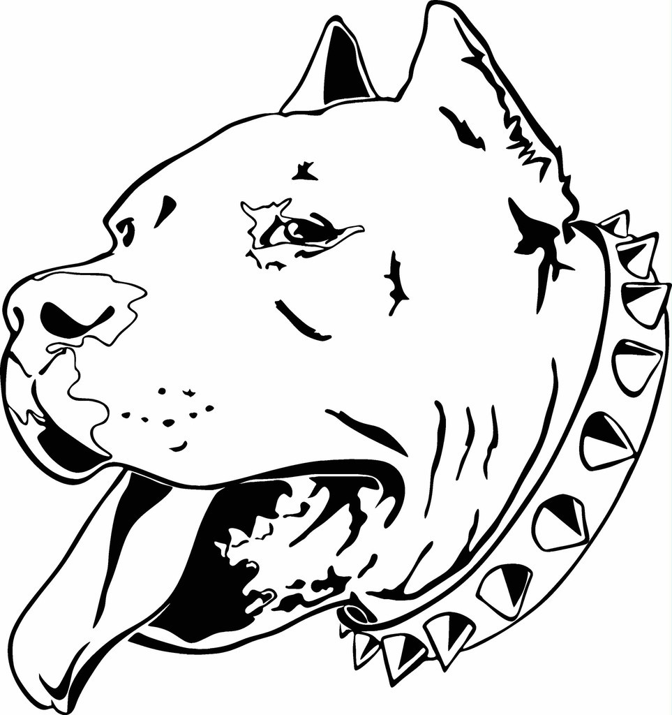 Pit Bull Coloring Book  American Pitbull Terrier Coloring Pages Download
