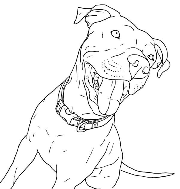 Pit Bull Coloring Book  Taking Pitbull Out for Walk Coloring Page