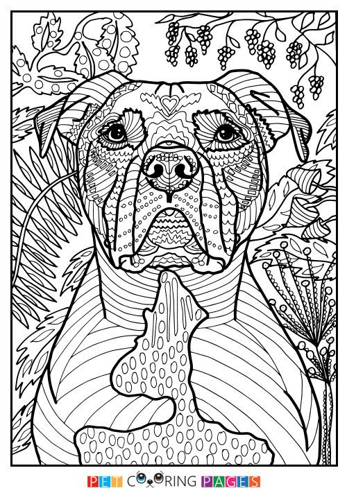 Pit Bull Coloring Book  Free printable American Pit Bull Terrier coloring page