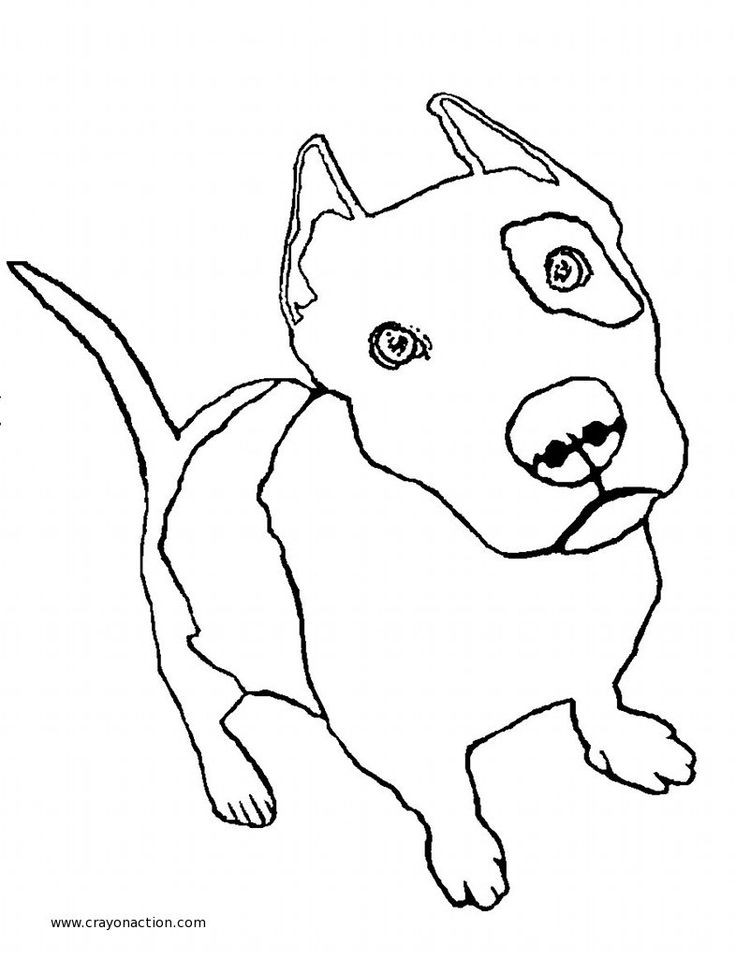 Pit Bull Coloring Book  17 Best images about Pit Bull color pages on Pinterest
