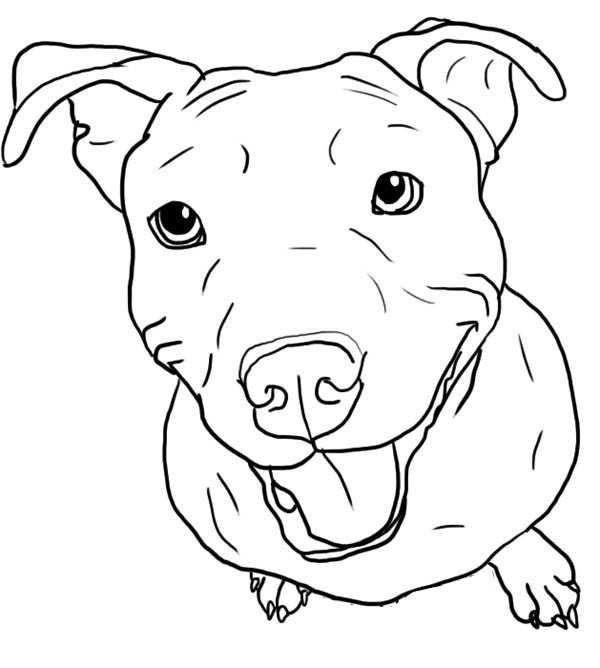 Pit Bull Coloring Book  Blue Nose Pitbull Coloring Pages Coloring Pages