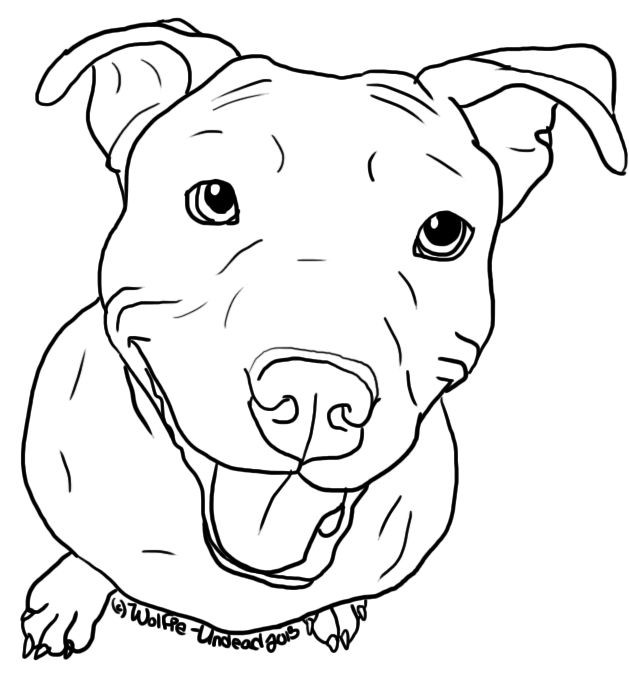 Pit Bull Coloring Book  Pitbull clipart outline Pencil and in color pitbull